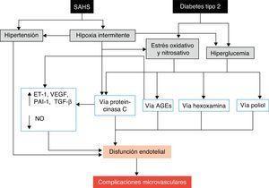 Mecanismos propuestos por los que el SAHS puede favorecer el desarrollo de complicaciones microvasculares de la diabetes. AGE: productos finales o residuos de la glucación avanzada&#59; ET-1: endotelina-1&#59; NO: óxido nítrico&#59; PAI-1: inhibidor del activador del plasminógeno-1&#59; TGF-β: factor de crecimiento tisular β&#59; VEGF: factor de crecimiento endotelial vascular.