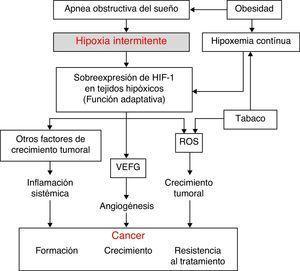 Hipótesis fisiopatológica sobre la relación entre el SAHS y el cáncer y papel de algunas de las variables de confusión más relevantes. HIF-1: factor inducido por la hipoxia; ROS: especies reactivas de oxígeno; VEFG: factor de crecimiento vascular endotelial.