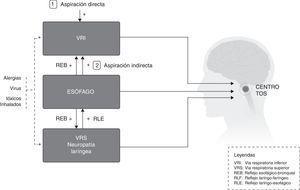 Interacciones de estímulos periféricos del reflejo de la tos.
