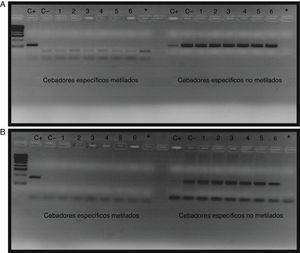 Amplificación de la región promotora del gen BMPR2 en pacientes con HAP A) y controles B). Los pocillos 1-6 corresponden al resultado de la amplificación de la PCR metilada específica y a la PCR no metilada específica de los pacientes, los pocillos C+ corresponden a los controles metilados, los pocillos C− a los controles no metilados y los pocillos * a los blancos con H2O.
