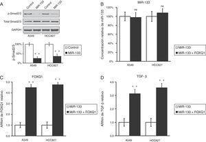 El miR-133 inhibe la vía del TGF-β, disminuyendo el FOXQ1 en líneas celulares de cáncer de pulmón. A) Concentraciones de proteína Smad2/3 totales y fosforiladas en líneas celulares A549 y HCC827, tras transfección con control miARN negativo o miR-133. Como control de carga se utilizó GAPDH. La cuantificación de la expresión de p-Smad2/3 normalizada a GAPDH también se muestra en los paneles inferiores. B-D) Concentraciones relativas de miR-133 (B), FOXQ1 ARNm (C) y TGF-β ARNm (D) en líneas celulares A549 y HCC827, tras transfección con miR-133 solo o cotransfección con miR-133 y FOXQ1 con expresión de plásmidos en ausencia de su 3'-UTR Los valores son medias ± EEM de 3 experimentos independientes. * n.s.: no significativo frente al control respectivo. ** p < 0,01 frente al control respectivo.