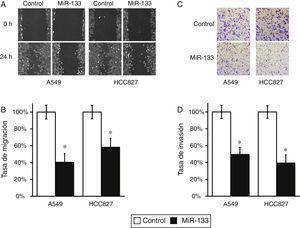 La expresión del MiR-133 inhibe la migración y la invasión de células de cáncer de pulmón. A) Prueba de cicatrización de heridas con líneas celulares A549 y HCC827, tras transfección con control miARN negativo o miR-133. B) Las distancias de migración respecto al control en la prueba de cicatrización de heridas se determinaron 24h después del daño. C) Prueba de invasión celular con líneas celulares A549 y HCC827, tras transfección con control miARN negativo o miR-133. D) El número de células invadidas respecto al control se cuantificó 24h después de sembrar las células. Los valores son medias ± EEM de 3 experimentos independientes. * p < 0,05 frente al control respectivo.