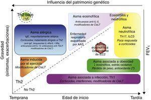 Fenotipos clínicos de asma y de tratamiento. Los fenotipos se representan de acuerdo con la edad de inicio, la gravedad de la enfermedad, la inflamación dependiente o no de Th2 y la influencia de la base genética. Además del tratamiento clásico con agonistas beta, los tratamientos específicos para cada grupo se señalan en cursiva.Ac: anticuerpo&#59; CisLTs: cisteinil-leucotrienos&#59; IL: interleucina&#59; ILC: células linfoides innatas TSLP: linfopoyetina del estroma tímico.