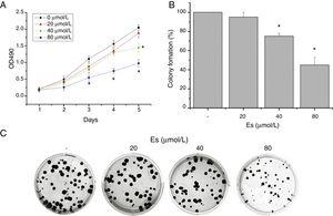 Esculetin treatment of LLC cells impaired its proliferation in liquid and semi-soft cultures. (A) Effect of esculetin treatment on LLC cell growth in liquid culture. MTT assay was performed in 96 wells plate. Mean±SD of 6 wells. (B) Effect of esculetin treatment on colony formation of LLC cells. Cells were seeded into soft agar in triplicate, and colonies were counted after 21–28 days of culturing. Mean±SD (3 wells) are expressed as percent variation relative to vehicle treated cells (control). *P<.05. (C) Representative pictures of colonies of LLC treated with esculetin.