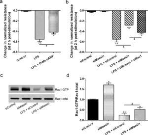 Moesin inhibition protects the LPS induced vascular hyperpermeability and increases Rac1 activity in PMVECs. (a) O-Me-cAMP protected LPS (10mg/L) induced vascular hyperpermeability. (b) TER changed between LPS stimulation, Moesin inhibition, and Rac1 inhibition. (c) Pull-down and Western Blotting assay were used to analyzed the Rac1 activity after LPS stimulation and Moesin inhibition and relative densitometric analysis of the Western Blots (d). Data were presented as the mean±SD. N=6, *P<0.05, **P<0.01 compared to control group. #P<0.05 between LPS group and LPS+O-Me-cAMP group. &P<0.05 between LPS+siControl group and LPS+siMoesin group. $P<0.05 between LPS+siMoesin group and LPS+siMoesin+siRac1 group.