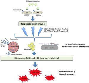 Fisiopatología de la activación de la coagulación en situación de sepsis. Los patógenos y sus componentes estimulan a los monocitos a través de receptores específicos situados en su superficie celular. Los monocitos activados producen una respuesta hiperinmune con liberación de distintas citocinas y otros mediadores inflamatorios, que activan plaquetas, neutrófilos y células endoteliales. Se produce un estado de hipercoagulabilidad y daño endotelial que modifica las propiedades del endotelio de un estado anticoagulante a uno procoagulante a través de la interrupción del glicocalix y la expresión del factor de von Willebrand (FVW). Por su parte, los neutrófilos expresan factor tisular y liberan proteínas granuladas y otros mediadores procoagulantes, como las trampas extracelulares de neutrófilos (NETs), compuestas de ADN procoagulante, histonas y otros patrones moleculares asociados al daño celular. Todo lo anterior lleva al desarrollo de los fenómenos micro y macrotrombóticos. FEC-G: factor estimulante de colonias de granulocitos; FNT-α: factor de necrosis tumoral alfa; IFN-γ: interferón gamma; IL: inteleucina; NETs: trampas extracelulares de neutrófilos.