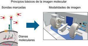 Imagen esquemática que muestra el proceso de actuación de la imagen molecular. Adaptado de Weissleder et al30.