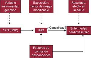 Resumen de los elementos particulares de un estudio de aleatorización mendeliana en cardiología. IMC: índice de masa corporal; FTO: Fat mass and obesity-associated SNP: polimorfismo de un solo nucleótido.