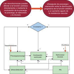 Fisiopatología y tratamiento de la insuficiencia aguda. Acciones de los diuréticos y los vasodilatadores. ADH: arginina vasopresina; PN: péptidos natriuréticos; SNS: sistema nervioso simpático; SRAA: sistema renina-angiotensina-aldosterona.