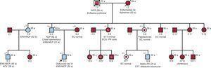 Árbol familiar y estudio de las mutaciones SCN5Ap.Arg219His y HCN4p.Arg1068His. Los cuadrados y círculos representan a varones y mujeres respectivamente. Los símbolos sombreados indican individuos afectados. Un punto en el interior del símbolo indica portador no afectado. La letra N en el interior del símbolo indica individuo no portador y no afectado. Los símbolos + y – indican respectivamente individuos testados genéticamente portadores y no portadores de las mutaciones. Una línea diagonal que atraviesa el símbolo indica sujeto fallecido. La edad de un evento aparece entre paréntesis. La edad actual o del fallecimiento aparece en la parte superior derecha del símbolo. a: años; ACV: accidente cerebrovascular; EC: evaluación clínica; ECG: electrocardiograma; ENS: enfermedad del nódulo sinusal; ETT: ecocardiograma transtorácico; FA: fibrilación auricular; MCP: marcapasos; VI: ventrículo izquierdo. SCN5Ap.Arg219His (patogénica)/HCN4p.Arg1068His (variante de significado incierto).