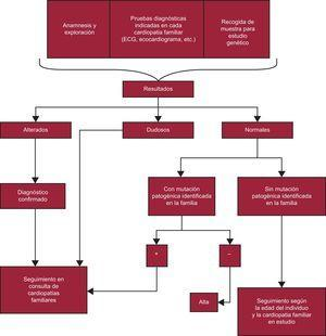 Algoritmo en el que se esquematiza la actuación con los familiares de un paciente diagnosticado de una cardiopatía familiar. Según las recomendaciones de la guía para el diagnóstico y el tratamiento de la miocardiopatía hipertrófica de la Sociedad Europea de Cardiología de 2014, se puede dar el alta al paciente sin haberle hecho una valoración clínica con ecocardiograma y electrocardiograma si no es portador de la mutación familiar. El Grupo de Trabajo de Cardiopatías Familiares de la Sociedad Española de Cardiología opina que no se debe dar el alta a ningún familiar de un paciente con una miocardiopatía sin previamente realizarle una ecocardiografía y un electrocardiograma, por la utilidad de estas exploraciones para establecer la cosegregación de la mutación en cada familia que respalde su patogenicidad (con mutaciones muchas veces de novo, sin experiencia publicada en la bibliografía) y por la posibilidad de que en la familia haya más de una mutación (p.ej., podría haber un familiar afectado que sea portador de la mutación no identificada en el estudio genético realizado). Se debería mantener esta actitud con todos los estudios familiares de las diferentes cardiopatías. ECG: electrocardiograma.