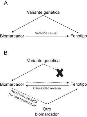 Representación gráfica del fundamento teórico de los estudios de aleatorización mendeliana. A: apoya la relación causal. B: no apoya la relación causal.