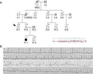 A: árbol genealógico de la familia (mujeres [○] y varones [□]). La flecha indica el probando. Las líneas en diagonal indican los pacientes fallecidos. + y – indican individuos con y sin las variantes p.R1644H Nav1.5 (azul) y p.S1961N Cav1.2 (rojo) respectivamente. Los símbolos en negro indican individuos afectados por el síndrome de QT largo, mientras que los símbolos en gris representan a individuos que no se han sometido a pruebas genéticas. Los símbolos en blanco representan a individuos estudiados sin ningún fenotipo clínico. B: electrocardiograma de los pacientes III.1, III.2, IV.1 y IV.2. MSC: muerte súbita cardiaca. Esta figura se muestra a todo color solo en la versión electrónica del artículo.