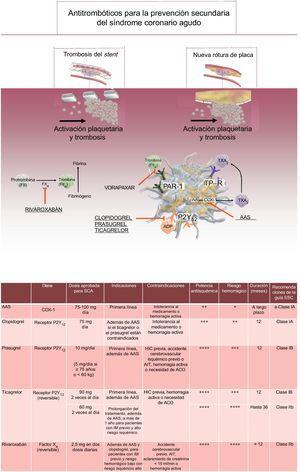 Antitrombóticos orales aprobados para la prevención secundaria del SCA: dianas moleculares, mecanismos de acción e indicaciones/contraindicaciones clínicas para los antitrombóticos orales aprobados en el contexto de un SCA. AA: ácido araquidónico; AAS: ácido acetilsalcílico; ACO: anticoagulantes orales; ADP: adenosina difosfato; AIT: accidente isquémico transitorio; COX-1: ciclooxigenasa 1; ESC: European Society of Cardiology; FII: factor II; FX: factor X; HIC: hemorragia intracraneal; IM: infarto de miocardio; P2Y12: receptor plaquetario P2Y12; PAR-1: receptor activado por la proteasa; SCA: síndrome coronario agudo; TP: receptor de tromboxano; TXA2: tromboxano A2.