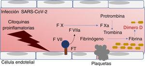 Representación del proceso de coagulación. Factores de coagulación y dímero D como marcadores en COVID-19. FT: factor tisular.