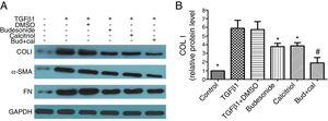 Effect of budesonide and calcitriol on the expression of airway remodeling-related proteins in human bronchial fibroblasts (HBFs). (A) The total protein was extracted from HBFs for Western blot analysis. (B) COL I protein expression in HBFs was determined by Western blot analysis, with GAPDH as an internal reference. The results are expressed as mean±SD. N=3 in each group (*P<0.05 vs. TGFβ1-stimulated group, #P<0.05 vs. calcitriol treatment group).