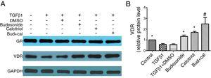 Effect of budesonide and calcitriol on the expression of glucocorticoid receptor (GR) and vitamin D receptor (VDR) in human bronchial fibroblasts (HBFs). (A) The total protein was extracted from HBFs for Western blot analysis. (B) VDR protein expression in HBFs was determined by Western blot analysis, with GAPDH as an internal reference. The results are expressed as mean±SD. N=3 in each group (*P<0.05 vs. TGFβ1-stimulated group, #P<0.05 vs. calcitriol treatment group).