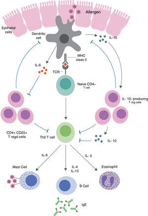 Treg-mediated regulation and suppression of food allergy. Defects in epithelial barrier can allow antigens to enter the lamina propria and trigger T cell activation. Induced allergen-specific Tregs skew the immune responses to a Th2-like phenotype and the production of pro-inflammatory cytokines via dendritic cell pathways.