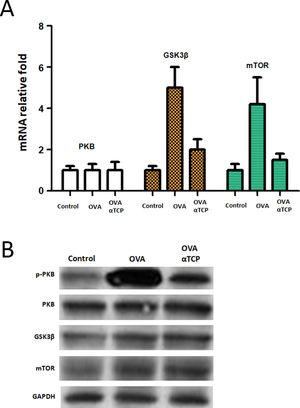 mRNA and protein levels of PKB, GSK3β and mTOR. n=10 each group. Data are representative of at least two independent experiments. n.s. not significant; *: p<0.05; **: p<0.01; ***: p<0.001. Error bar values represent SEM. For comparison between two groups, Student's two-tailed t test was used. Western-blot to detect protein levels of p-PKB, PKB, GSK3b and mTOR.