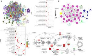 Gene functional enrichment analysis of the targets. (a) Gene Ontology enrichment analysis. In Gene Ontology enrichment network, each node represents a biological process term, with different colors assigned to different clusters. The top 20 significant terms of biological processes were also presented as a bubble diagram. (b) Target-related KEGG pathway analysis. KEGG pathway network and the enriched pathways bubble diagram of the targets were presented; these targets were enriched in the asthma pathway, and the genes with red color in the asthma pathway represent CAD related targets. The figure of the asthma pathway was downloaded from the KEGG database (https://www.genome.jp/kegg/).