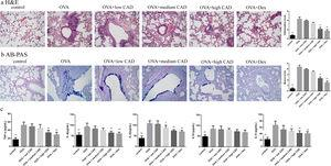 Effect of CAD on OVA-induced asthmatic mice. (a) Effect of CAD on airway inflammation of asthma mice (HE staining, ×400); (b) effect of CAD on mucus hypersecretion of asthma mice (AB-PAS staining, ×400); (c) effect of CAD on TNF-α, IL4, IL5, IL10, and IL13 levels in mice BALF. The data presented are the means±SD, *P<0.05 or **P<0.01 vs. the OVA group. BALF: bronchoalveolar lavage fluid.