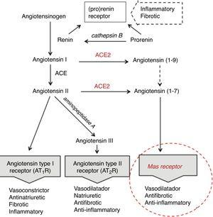 Renin-angiotensin system abbreviated.