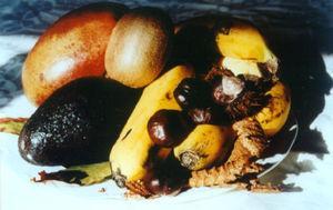 Alimentos vegetales incluidos en el síndrome de reactividad cruzada látex-frutas.