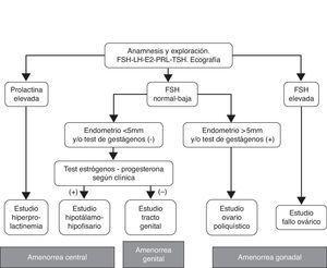 Algoritmo diagnóstico. Grupo de Interés Endocrinología Reproductiva (SEF 2010).