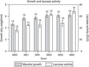 Growth and laccase enzyme production by M. phaseolina in minimum salt medium supplemented with glucose and glutamic acid as carbon and nitrogen sources, respectively, supplemented with CuSO4 0.2mM. The numbers over the bars indicate the day when the highest value was obtained. Values represent the mean of three replicates and SEM.