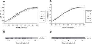 Curvas de crecimiento para S.aureus ATCC 29213 (A) y USA300 (B) cultivadas con diferentes concentraciones de quercetina. Análisis del efecto de quercetina en la secreción de alfa toxina mediante western blot para las cepas 29213 (C) y USA300 (D).