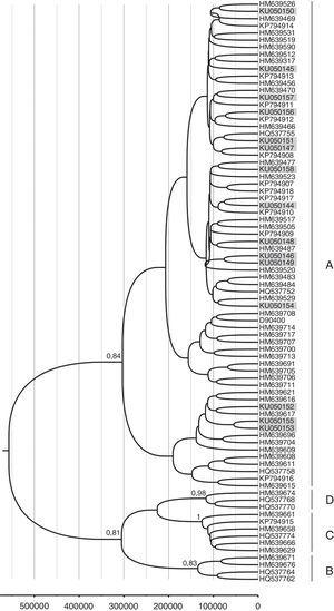 Molecular epidemiology and phylogenetic analysis of human