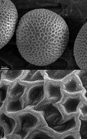 SEM observation of T. canis eggs of the control group, incubated for 14 days. (A) Structure of the shell and shape of the egg preserved without any alterations (1100×). (B) Magnification of the egg shell (8000×).
