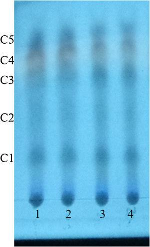 Thin layer chromatography by reversed phase C18 of the thaxtomin extractions produced by S. acidiscabies ATCC 49003T and strain V2. Note: C, compound; 1–2: S. acidiscabies; 3–4: Streptomyces sp. V2.