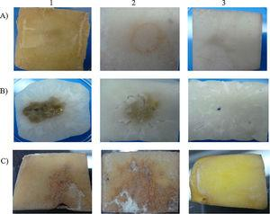 In vitro results on (A) potato and (B) radish inoculated with crude extract on (C) potato inoculated with spore suspension of (1) Streptomyces acidiscabies ATCC 49003T, (2) strain V2 and, (3) none (distilled sterile water).