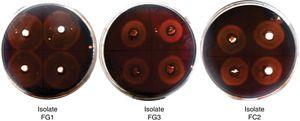 Cellulolytic activity of fungal isolates (qualitative analysis). Agar plate containing CMC as substrate and Congo red as indicator. The wells were filled with the supernatant of the selected strains and incubated at 30°C for 48h. A zone of clearance around the wells indicates cellulose degradation.