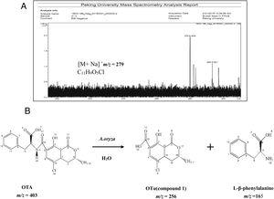 Analysis of the production of OTA treated with A. oryzae. (A) Analysis of molecular formula of compound 1 by High-resolution FT-ICR-MS map. (B) The products of OTA degraded by A. oryzae in hydrolysis processing of carboxyl peptide bond.