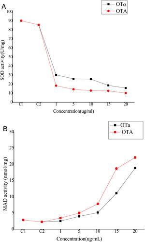 The activity of (A) SOD in BHK-21 cells and the content of (B) MDA in medium with OTA and OTα treated (n=10). C1 stand for normal control means BHK-21 cells without any treatment. C2 stand for BHK-21 cells treat with Methanol solvent, Data are given as mean±SD.