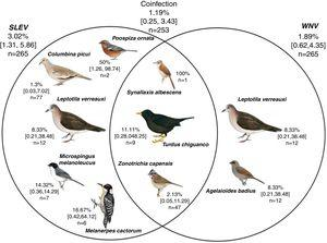 Exposure of the avian community to the viruses St. Louis encephalitis and West Nile in the Province of La Rioja, Argentina. Numbers represent infection prevalence (%), confidence intervals [], and number of sampled individuals (n). Analyzed birds (n: La Rioja – n: Chilecito): Leptotila verreauxi (1–11), Columbina picui (59–20), Colaptes melanochloros (0–1), Melanerpes cactarum (1–5), Rhinocrypta lanceolata (0–1), Pseudoseisura lophotes (2–3), Furnarius rufus (0–3), Leptasthenura fuliginiceps (0–1), L. platensis (0–1), Coryphistera alaudina (1–0), Cranioleuca pyrrhophia (0,2), Synallaxis albescens (2–0), S. frontalis (2–0), Tarphonomus certhioides (0–3), Asthenes baeri (1–0), A. dorbignyi (0–1), Phytotoma rutila (0–5), Troglodytes aedon (1–3), Elaenia sp. (1–0), Knipolegus aterrimus (1–0), Stigmatura budytoides (2–2), Serpophaga subscristata (0–1), Geothlypis aequinoctialis (1–0), Turdus amaurochalinus (0–5), T. chiguanco (2–7), Saltator multicolor (11–0), S. aurantiirostris (0–4), Coryphospingus cucullatus (1–0), Catamenias analis (1–1), Lophospingus pusillus (5,0), Piranga flava (0,3), Pipraeidea bonariensis (1–16), Poospiza ornata (2–0), Microspingus melanoleuca (1–7), M. pectoralis (1–0), Sporophila caerulescens (2–0), Zonotrichia capensis (21–30), Icterus pyrrhopterus (0,1), Agelaioides badius (9–3). *The birds' scientific name follows Remsen et al.35 recommendations, and the images belong to del Hoyo et al.10