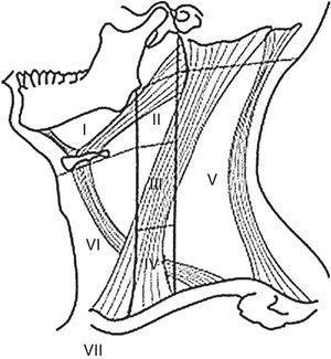 Compartimentos ganglionares del cuello.