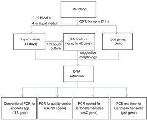 Flowchart of the procedures performed.