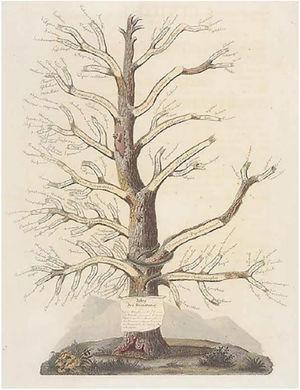 Jean-Louis Alibert's Tree of Dermatoses. Source: Collection le Musée de L'hôpital St Louis.54