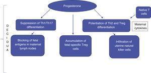 Suppression of cytotoxicity and the state of immunomodulation at the maternal-fetal interface.