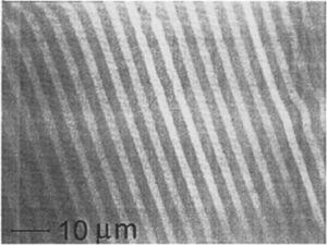 – Optical microscope image showing the microstructure of the CaZrO3 – CaSZ eutectic. Light is guided by the CaSZ phase, appearing white in the image, as it presents a higher refractive index.