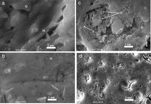 SEM micrographs of the samples sintered at 1100°C for 2h: (a) N00, (b) G10, (c) G20 and (d) G30. Q=quartz, M=mullite, A=anorthite, P=porosity.