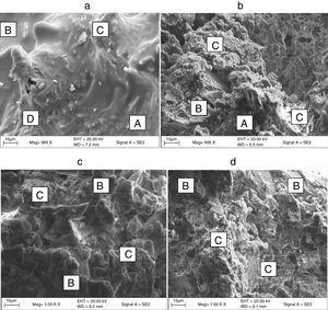 Representative SE images of (a) SLP series at 1000°C, (b) BSP series at 1000°C, (c) SLP series at 1200°C and (d) BSP series at 1200°C.