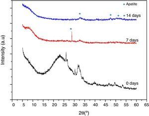 XRD analysis of formed apatite precipitates on VC surface at 0, 7 and 14 days in SBF.