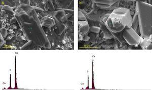 SEM micrographs and EDX elemental analyses of gypsum crystals formed after 120 days of exposure to sulfate solution in the paste specimens of (a) plain Portland cement and (b) mixture containing 20 mass% spent catalyst.