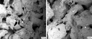 SEM photographs of top surface of sample after corrosion with steam for 96h (L) S; (R) SA.