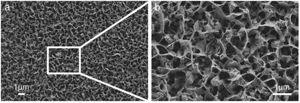 FESEM images of ZnO layer electrodeposited from Zn(NO3)2 precursor in aqueous media.