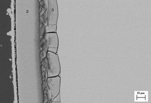 Imagen MEB de la muestra procesada a 300mm/h (M300) tras el ensayo de bioactividad. Capas 1, 2 y 3 (CDHA) con contenido creciente en Si.